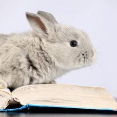 rabbit-reading-book